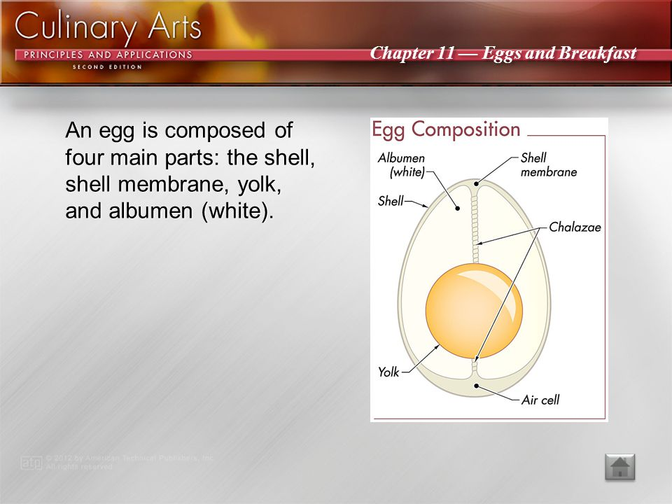 An egg is composed of four main parts: the shell, shell membrane, yolk, and albumen (white).