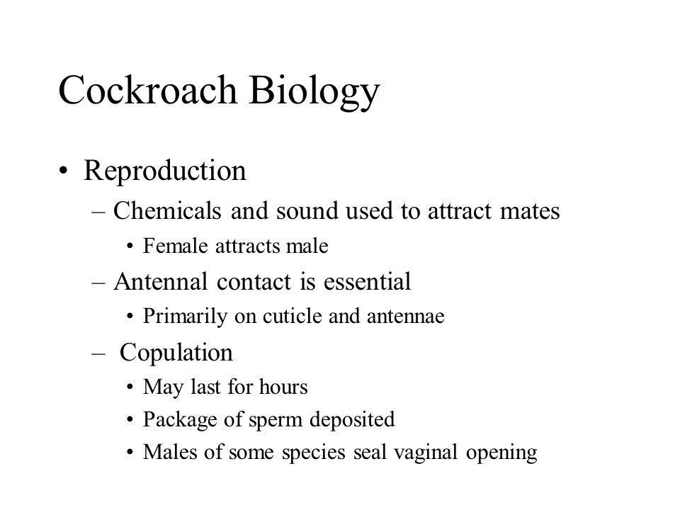 Cockroach Biology Reproduction