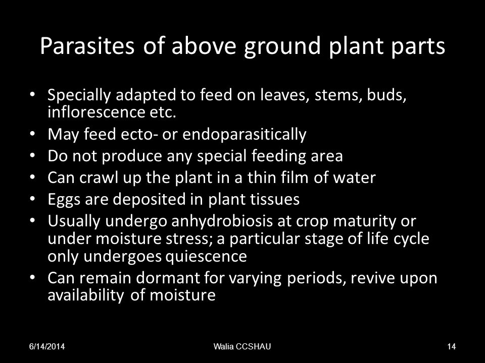 Parasites of above ground plant parts