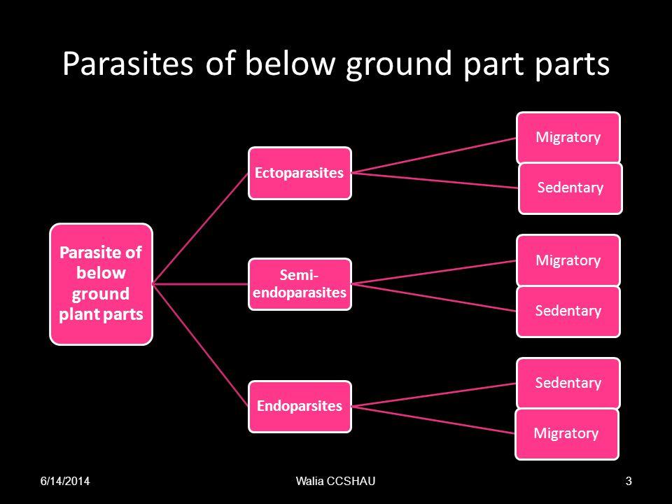 Parasites of below ground part parts