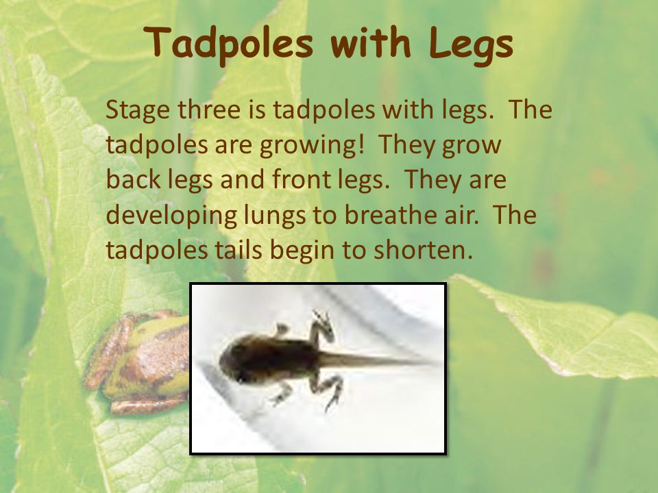 Tadpoles with Legs