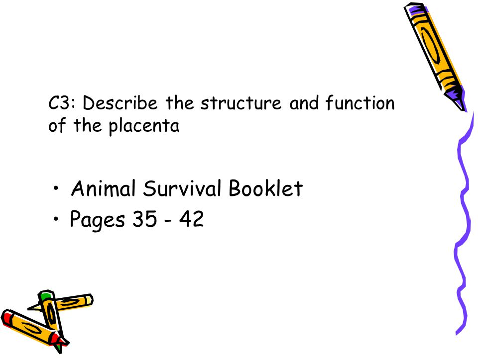 C3: Describe the structure and function of the placenta