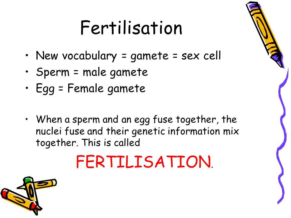 Fertilisation FERTILISATION. New vocabulary = gamete = sex cell