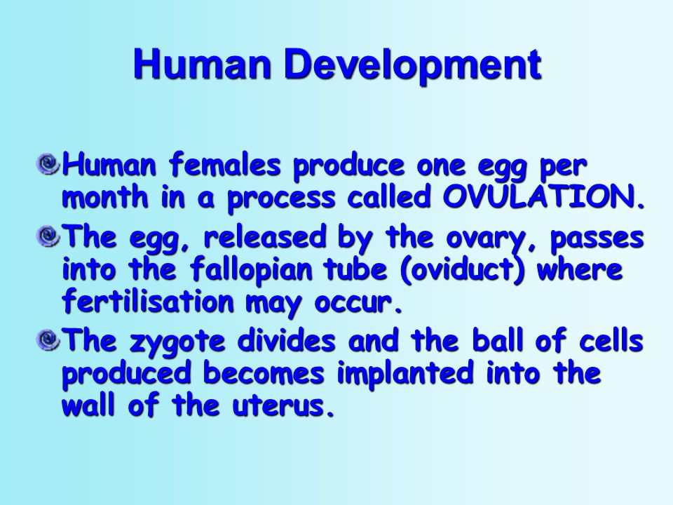 Human Development Human females produce one egg per month in a process called OVULATION.