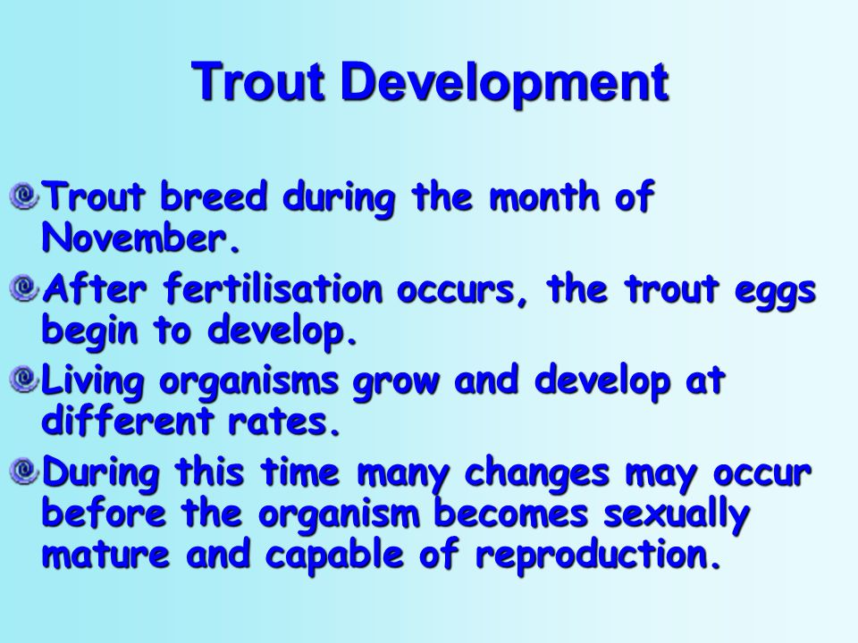 Trout Development Trout breed during the month of November.