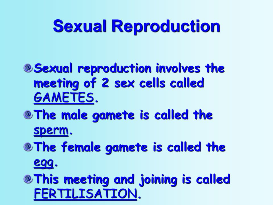 Sexual Reproduction Sexual reproduction involves the meeting of 2 sex cells called GAMETES. The male gamete is called the sperm.