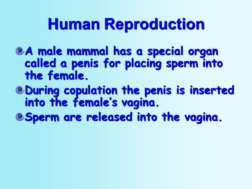Human Reproduction A male mammal has a special organ called a penis for placing sperm into the female.
