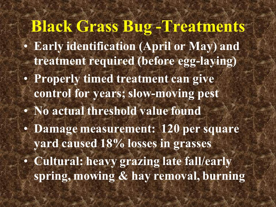 Black Grass Bug -Treatments