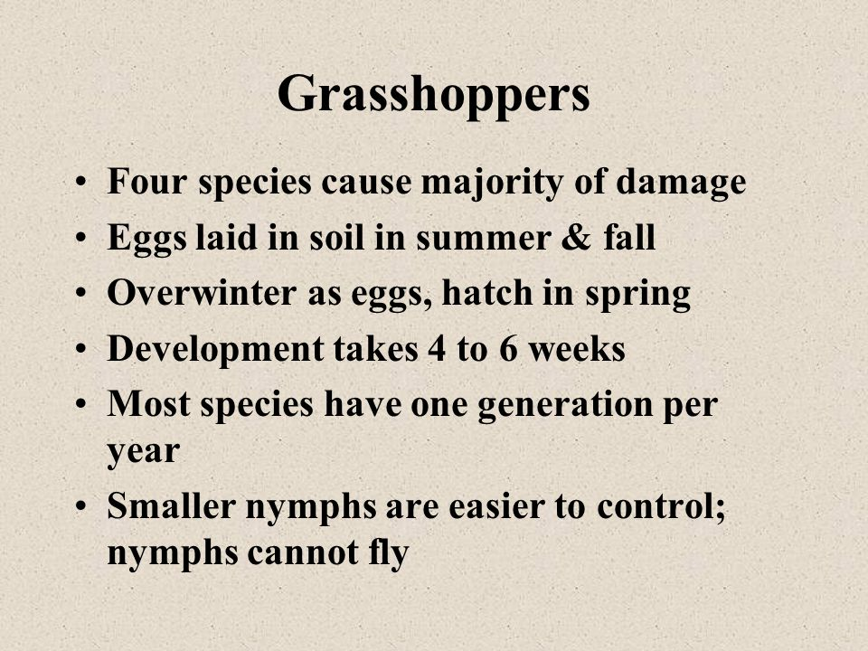 Grasshoppers Four species cause majority of damage