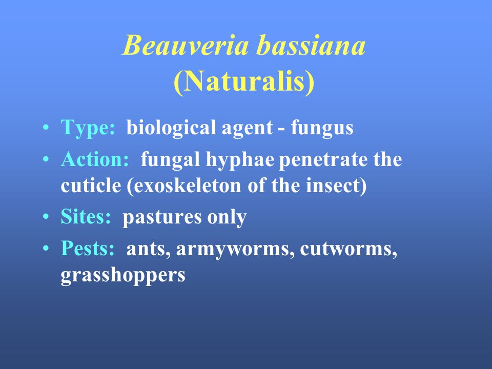 Beauveria bassiana (Naturalis)
