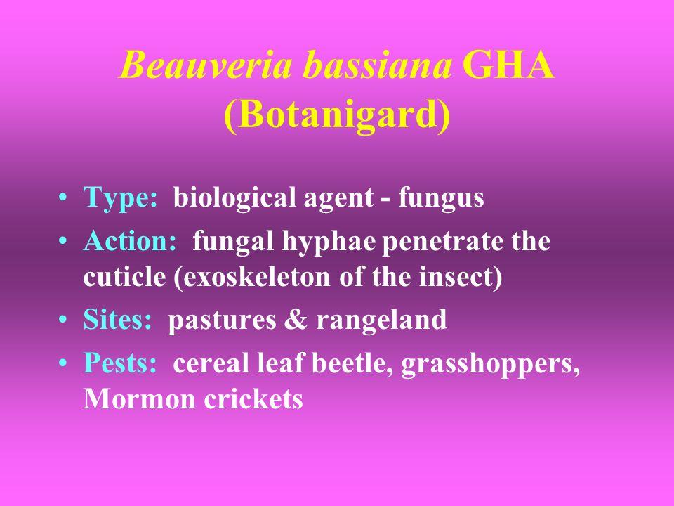 Beauveria bassiana GHA (Botanigard)