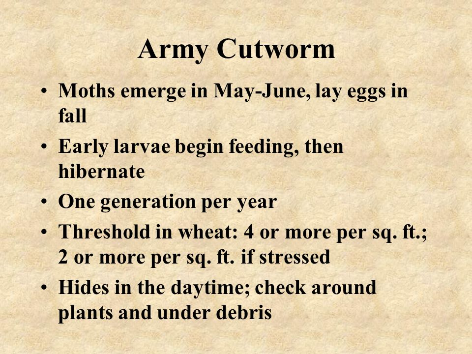 Army Cutworm Moths emerge in May-June, lay eggs in fall