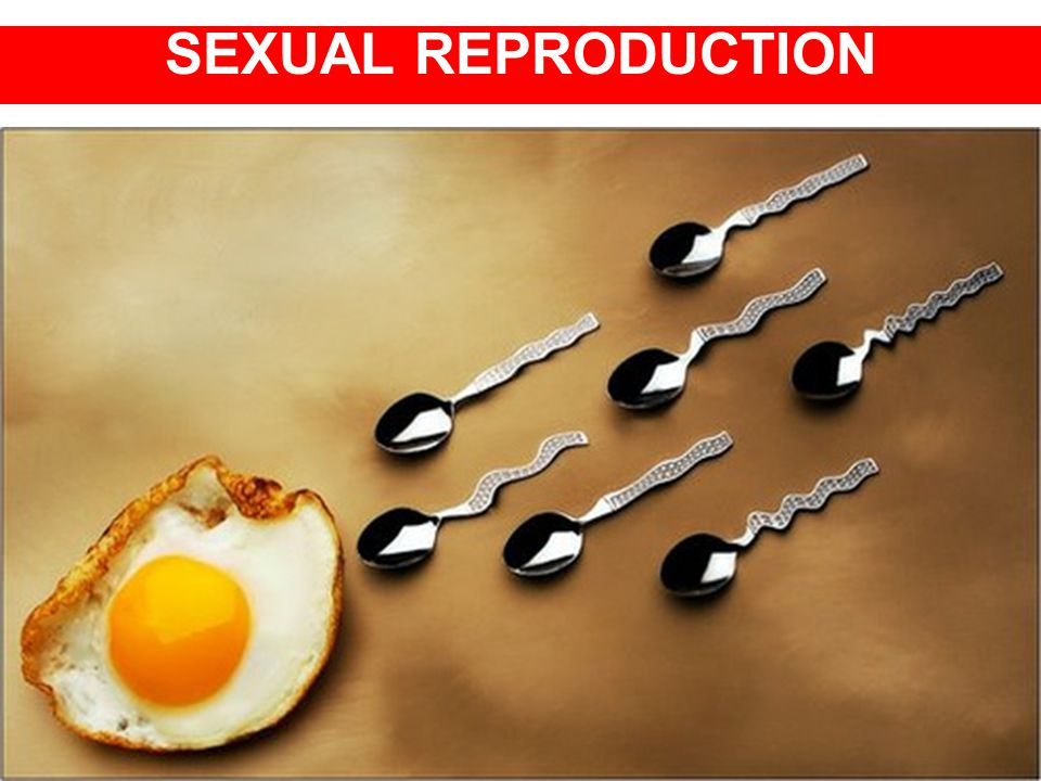 SEXUAL REPRODUCTION AND DEVELOPMENT