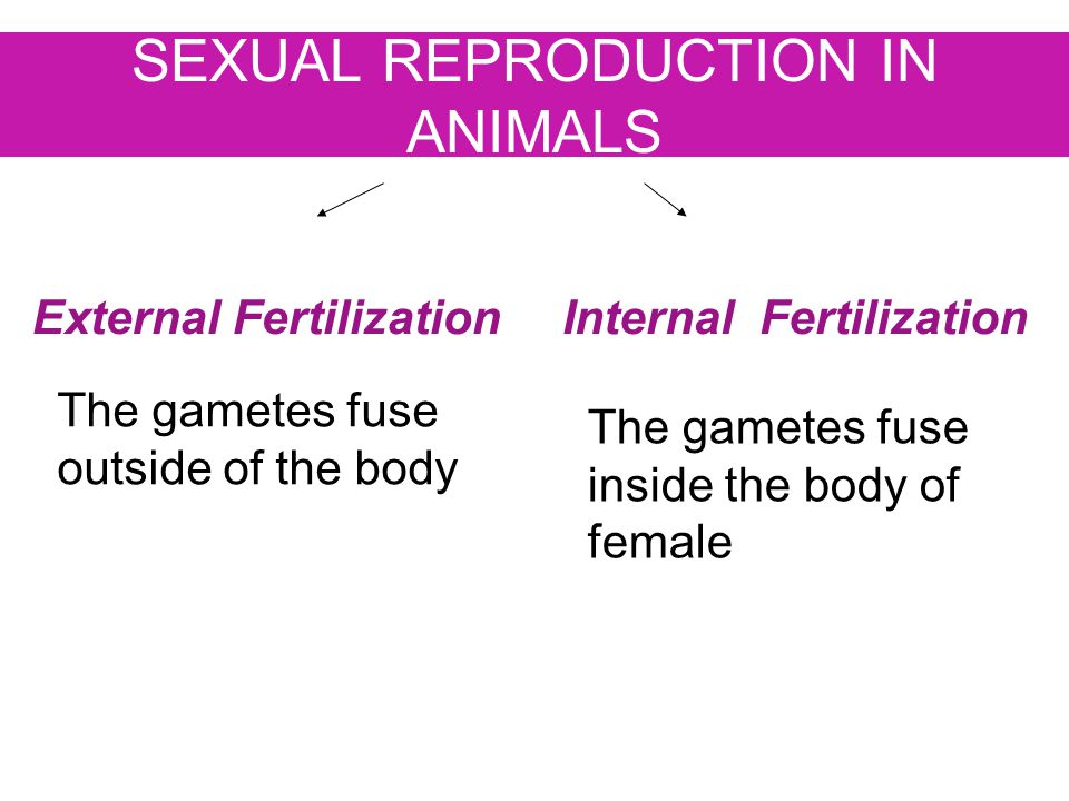 SEXUAL REPRODUCTION IN ANIMALS