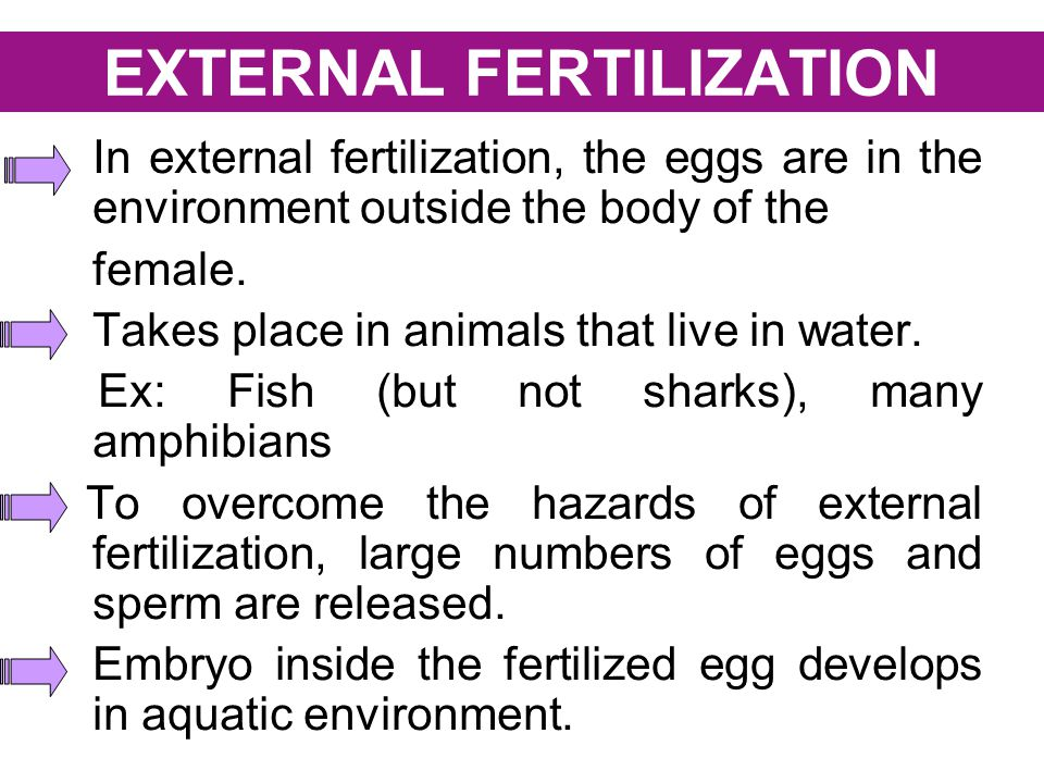 EXTERNAL FERTILIZATION
