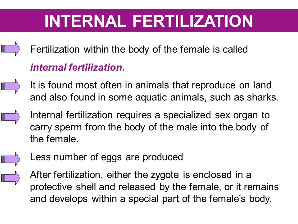 Internal fertilization