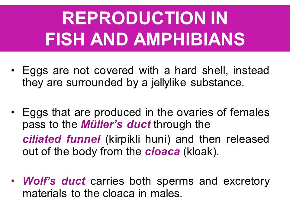 REPRODUCTION IN FISH AND AMPHIBIANS