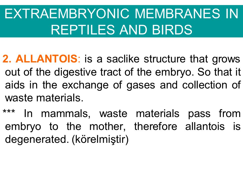 EXTRAEMBRYONIC MEMBRANES IN REPTILES AND BIRDS