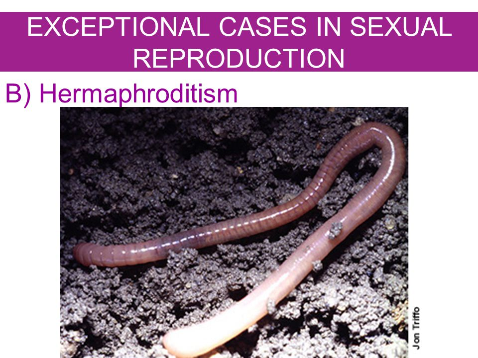 EXCEPTIONAL CASES IN SEXUAL REPRODUCTION