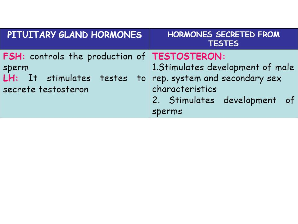 PITUITARY GLAND HORMONES HORMONES SECRETED FROM TESTES
