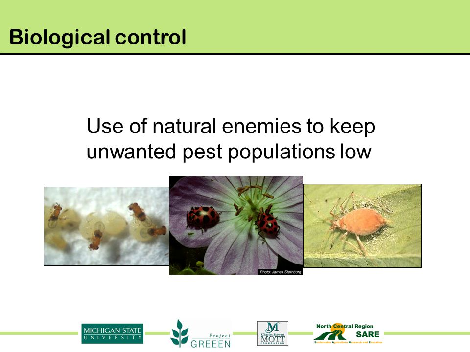 Use of natural enemies to keep unwanted pest populations low
