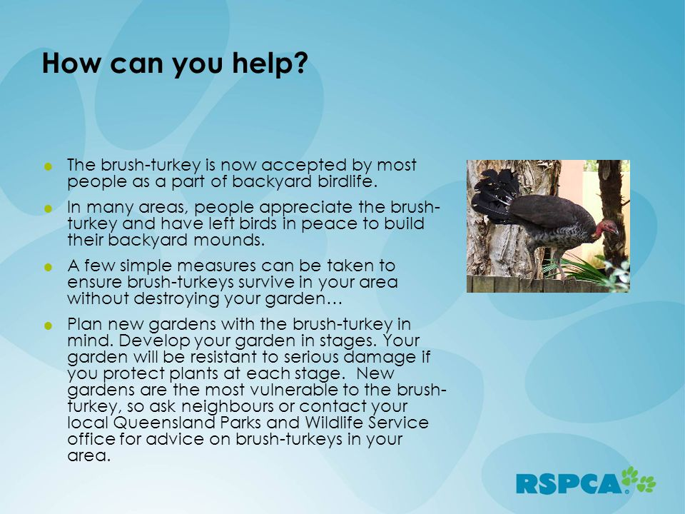 How can you help The brush-turkey is now accepted by most people as a part of backyard birdlife.