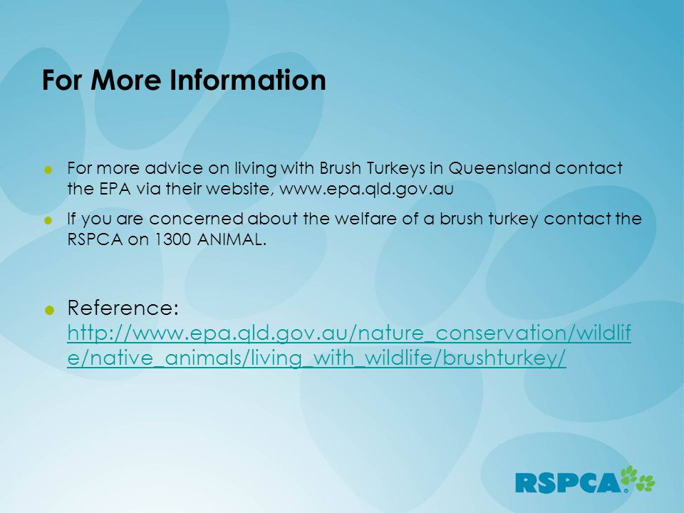 For More Information For more advice on living with Brush Turkeys in Queensland contact the EPA via their website, www.epa.qld.gov.au.