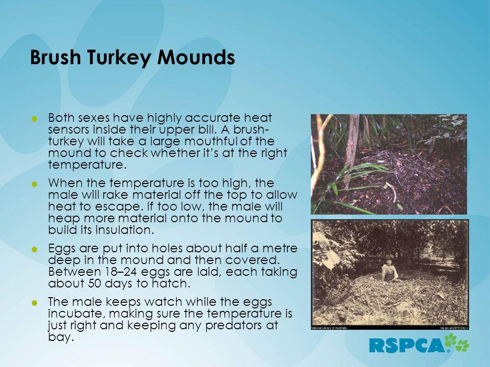 Brush Turkey Mounds