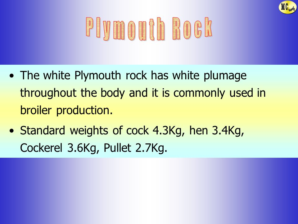 Plymouth Rock The white Plymouth rock has white plumage throughout the body and it is commonly used in broiler production.