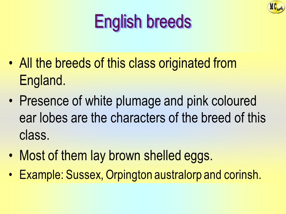 All the breeds of this class originated from England.