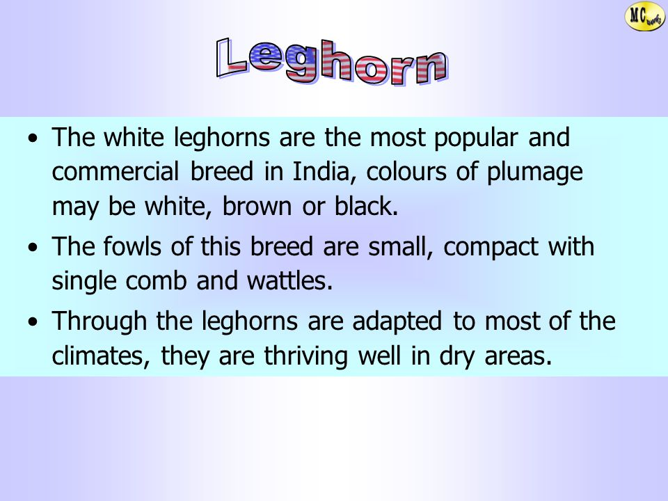 Leghorn The white leghorns are the most popular and commercial breed in India, colours of plumage may be white, brown or black.