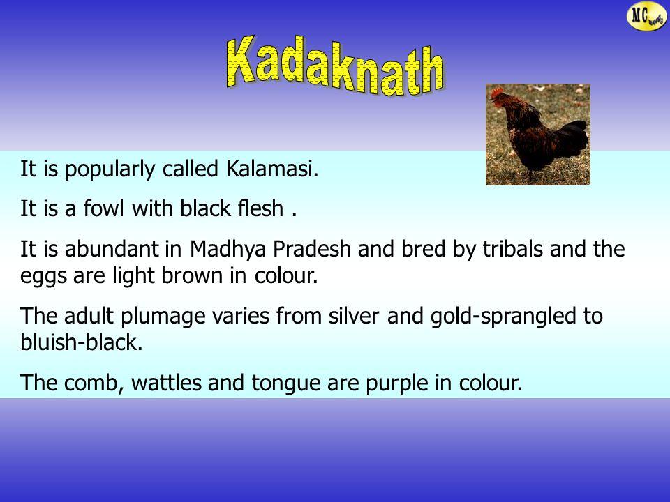 Kadaknath It is popularly called Kalamasi.