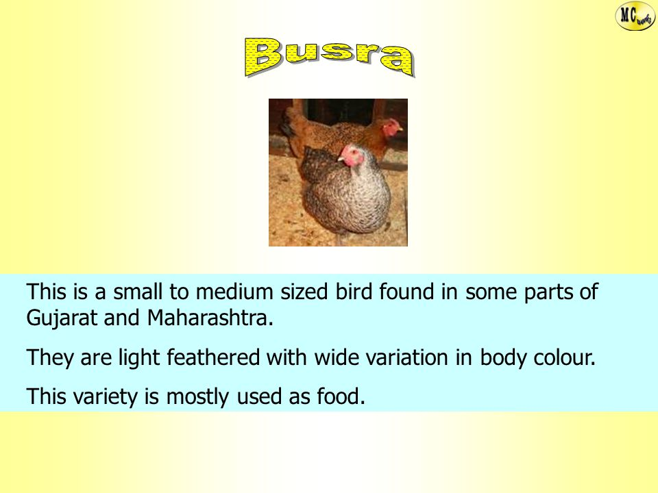 Busra This is a small to medium sized bird found in some parts of Gujarat and Maharashtra.