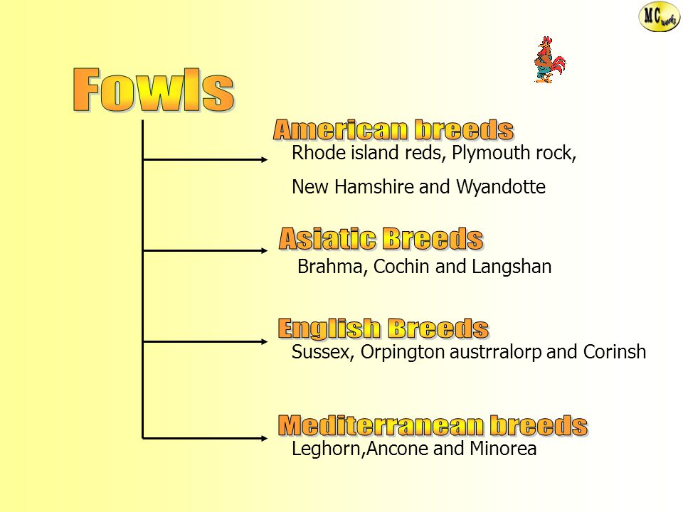 Fowls American breeds Asiatic Breeds English Breeds