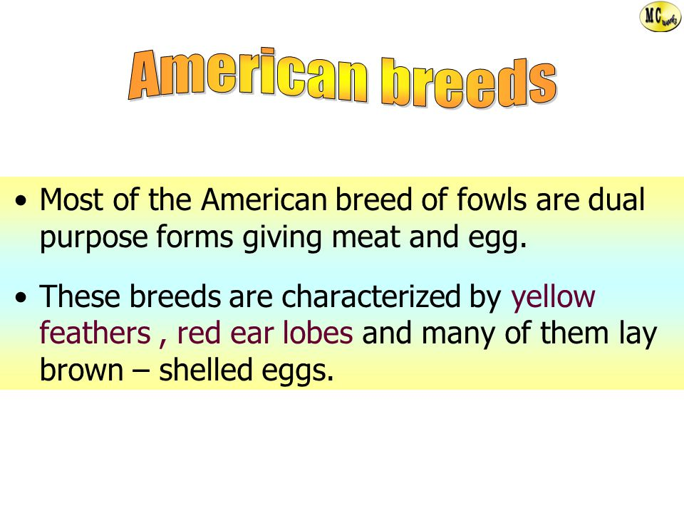 American breeds Most of the American breed of fowls are dual purpose forms giving meat and egg.