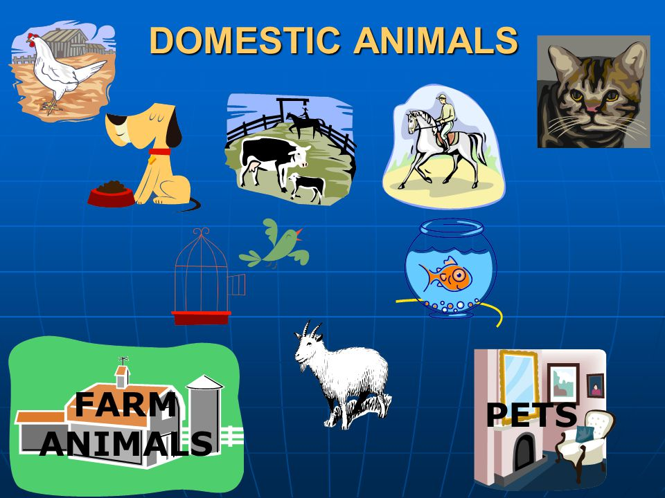 DOMESTIC ANIMALS FARM ANIMALS PETS
