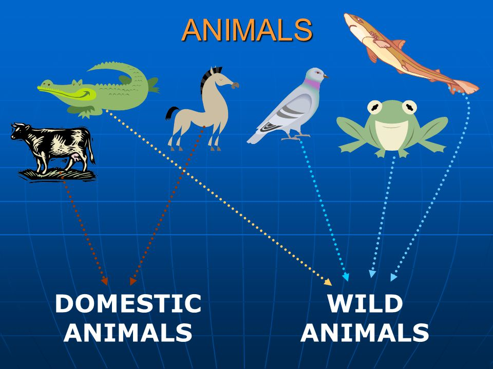 ANIMALS DOMESTIC ANIMALS WILD ANIMALS