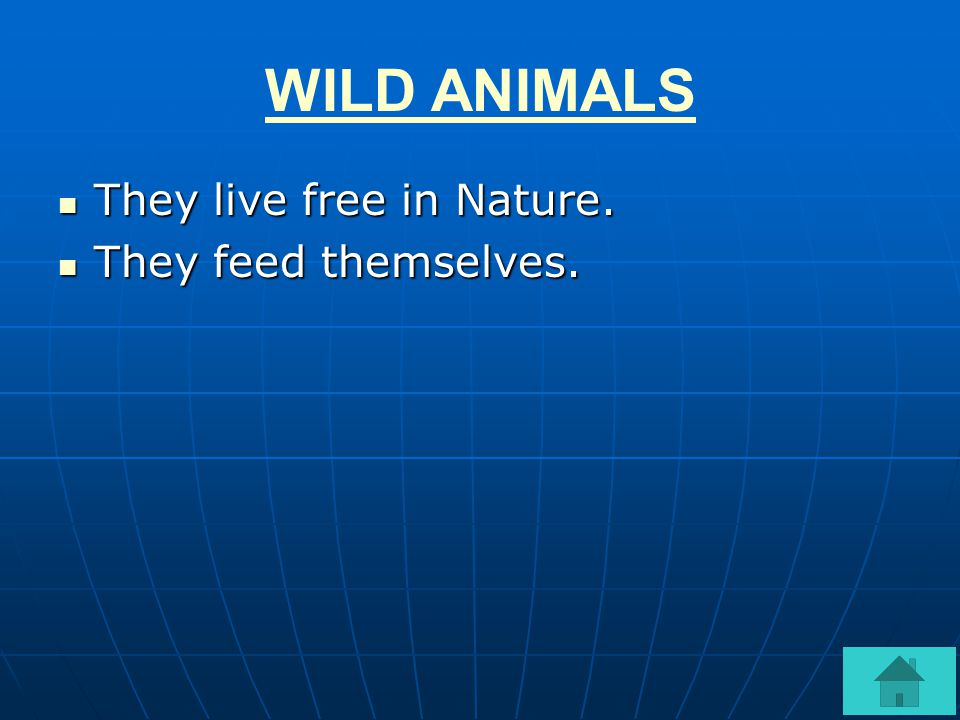 WILD ANIMALS They live free in Nature. They feed themselves.