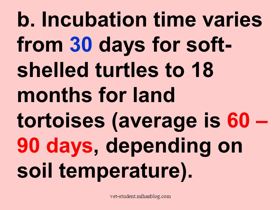 b. Incubation time varies from 30 days for soft-shelled turtles to 18 months for land tortoises (average is 60 – 90 days, depending on soil temperature).