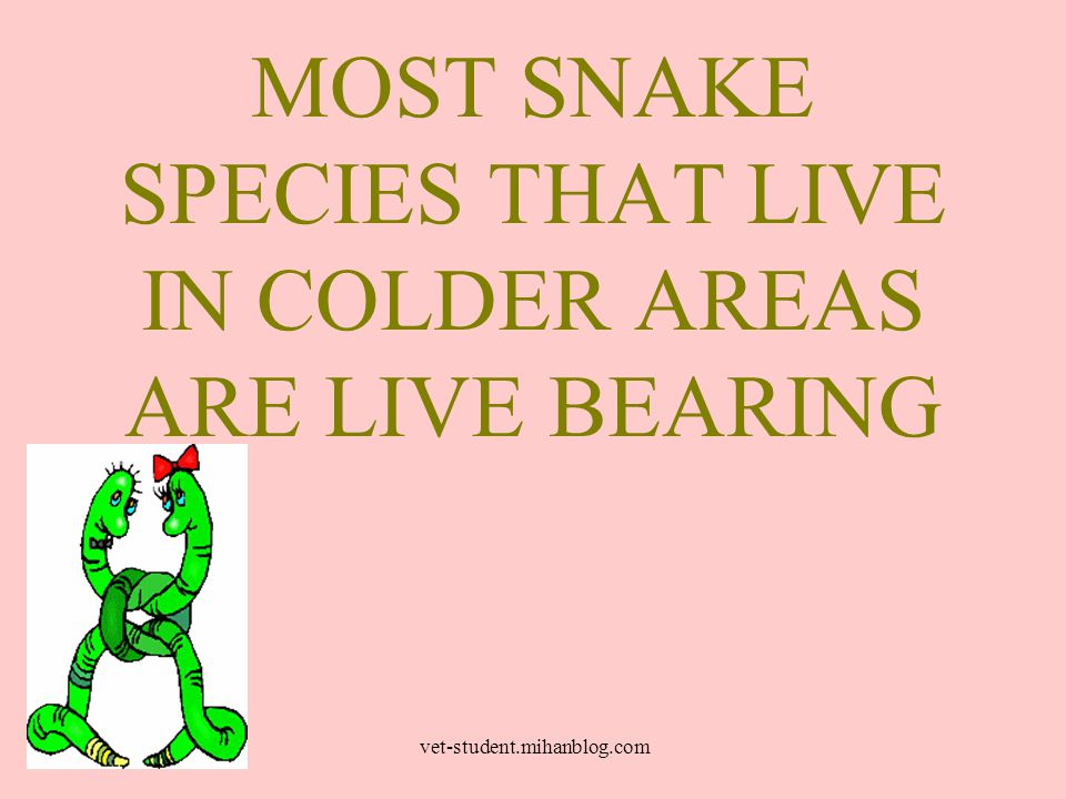 MOST SNAKE SPECIES THAT LIVE IN COLDER AREAS ARE LIVE BEARING