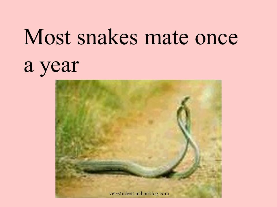 Most snakes mate once a year