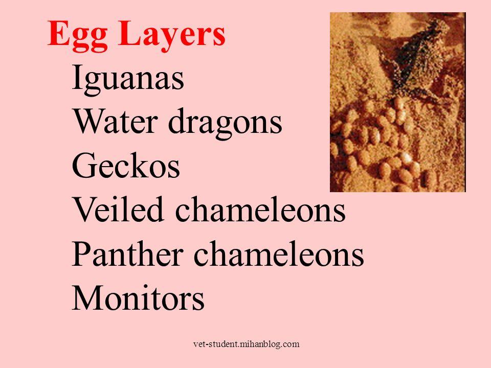 Egg Layers Iguanas Water dragons Geckos Veiled chameleons