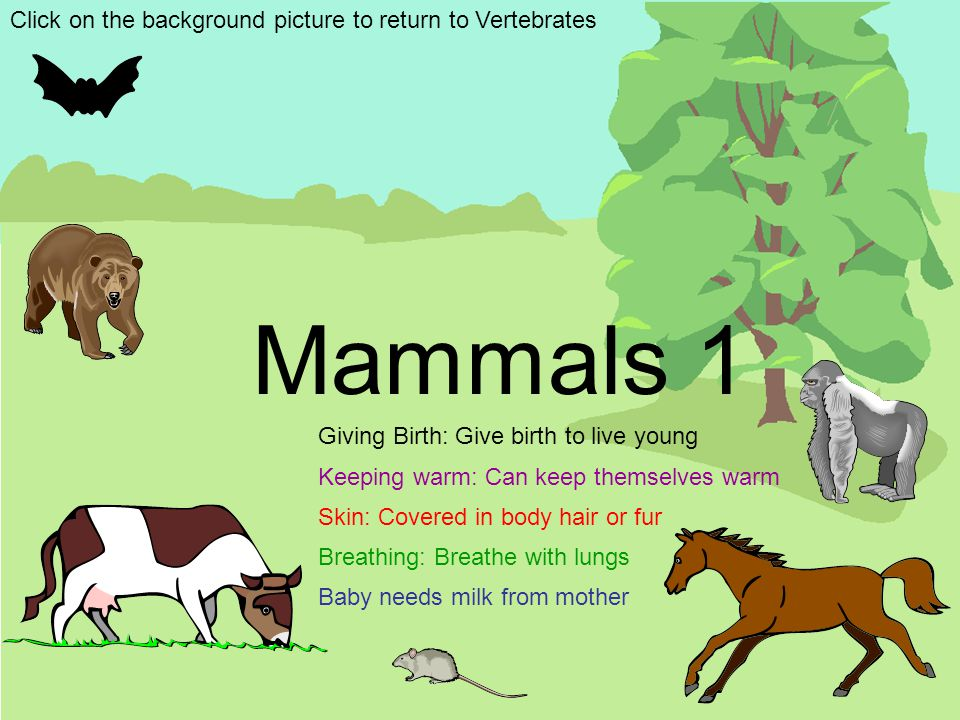 Mammals 1 Click on the background picture to return to Vertebrates