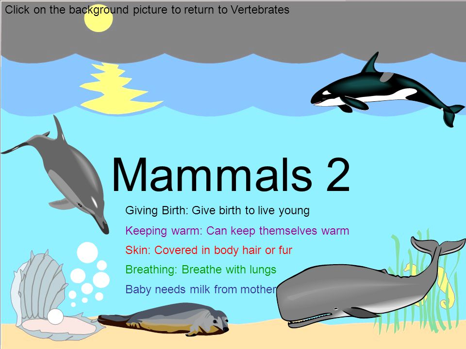 Mammals 2 Click on the background picture to return to Vertebrates