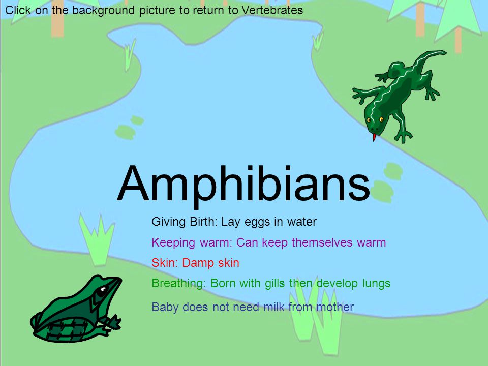 Amphibians Click on the background picture to return to Vertebrates
