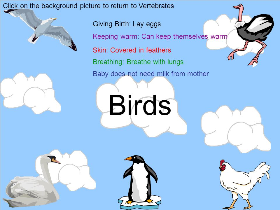 Birds Click on the background picture to return to Vertebrates