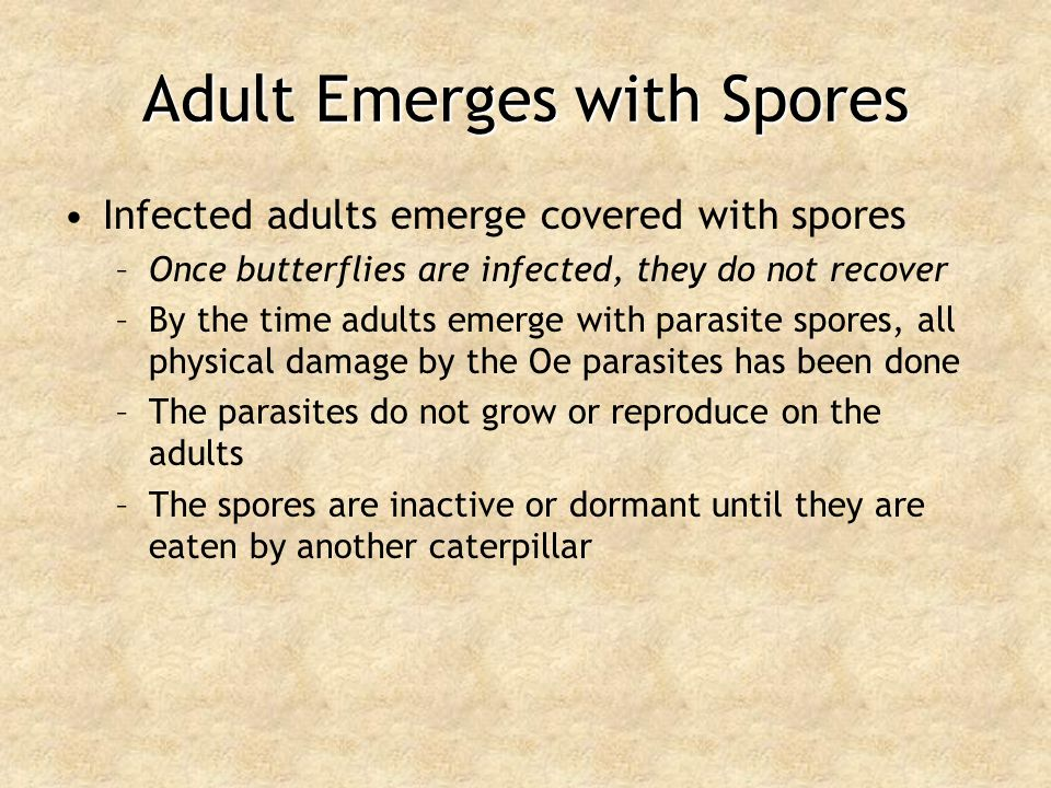 Adult Emerges with Spores