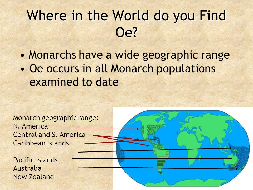 Where in the World do you Find Oe