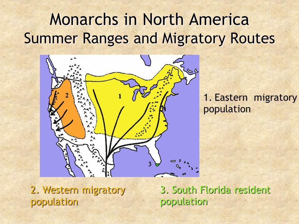 Monarchs in North America Summer Ranges and Migratory Routes