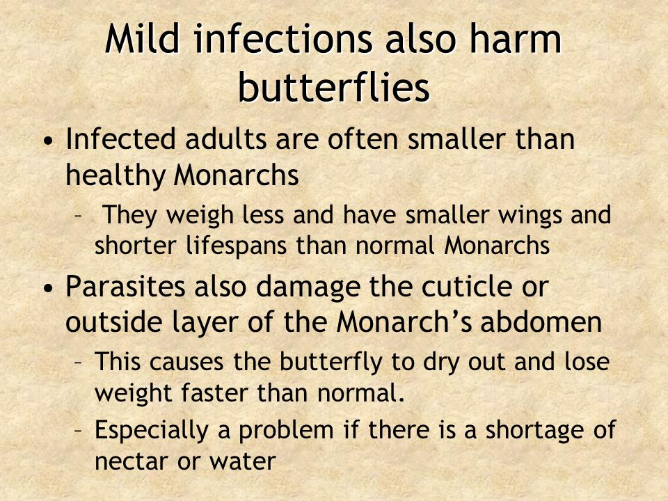 Mild infections also harm butterflies
